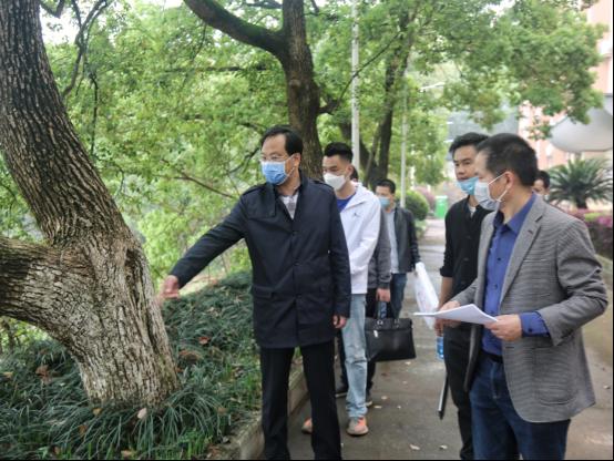 校党委书记高山调研学校绿化建设工作