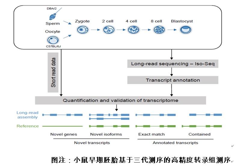 《NatureCommunications》报道我校生命科学学院乔云波副教授研究团队三代测序的最新研究成果