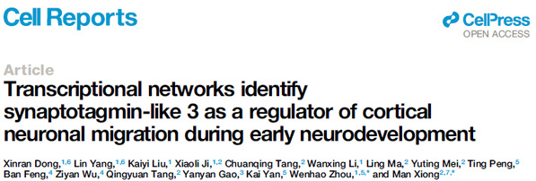 附属儿科医院周文浩/熊曼团队发现调控早期人脑发育的隐藏驱动因子SYTL3