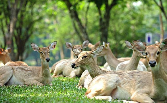上海野生动物园 AAAAA级景区