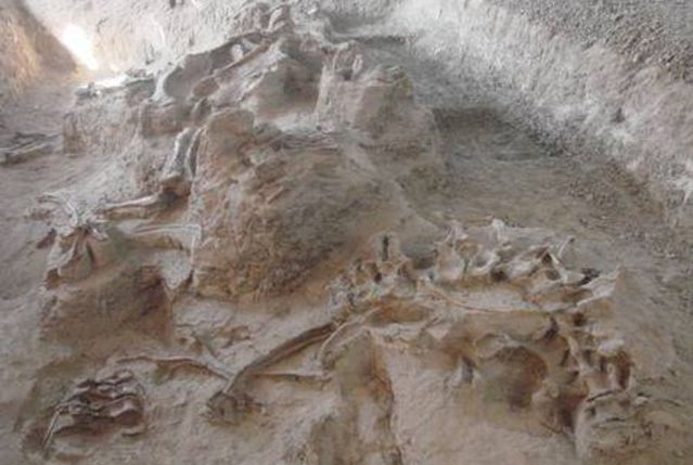 灵武恐龙化石遗址