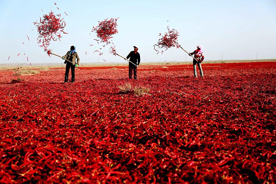 新型职业农民培训经典课程安排