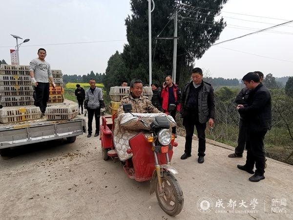 【扶贫路上】《简阳之声》报道我校帮扶民强村订单农业