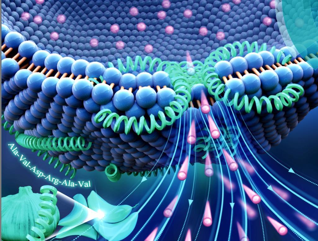 天大科研团队首次发现三种活性肽 有望成为抗生素替代品