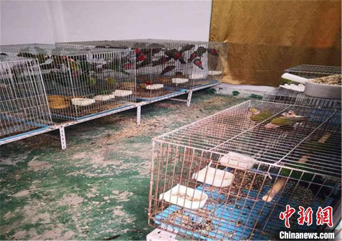 广东惠州破获一起特大非法出售濒危保护动物案件