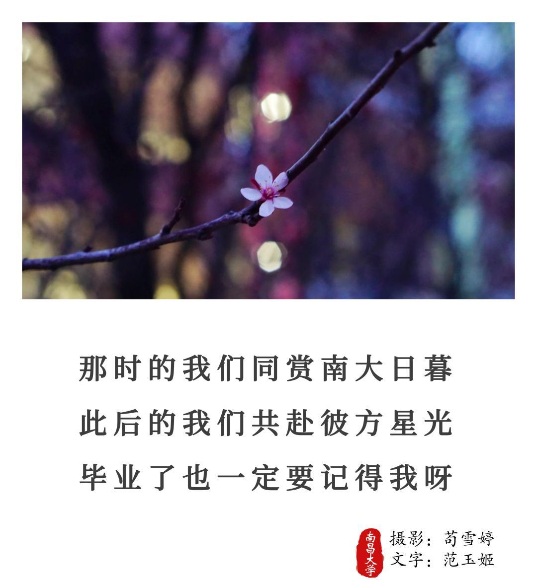 【毕业季】落情于笔,三行有你,爱你如诗