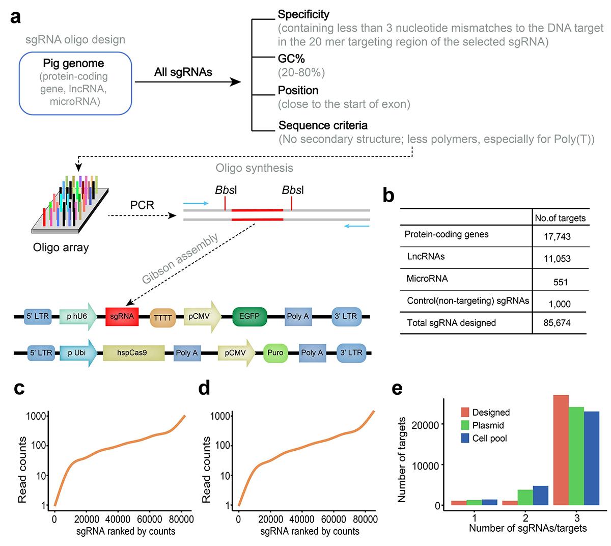我校构建基于猪CRISPR文库技术的高通量功能基因筛选平台