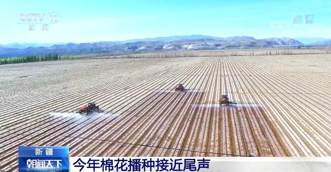 强迫症患者的福音 来看新疆棉花和番茄机械种植现场