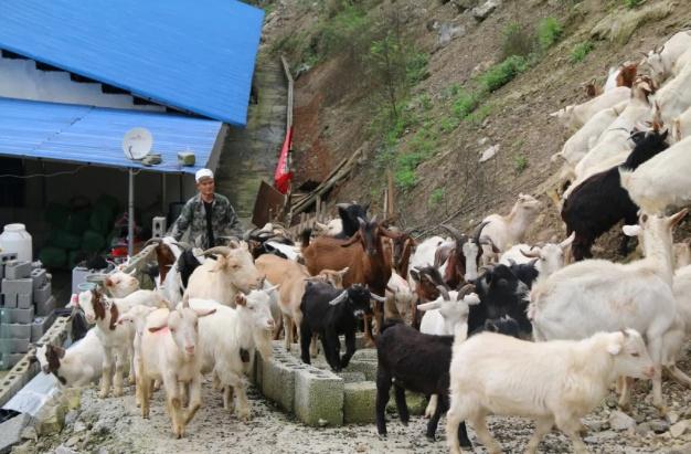 贵州沿河马猛:放弃务工高薪 返乡创业带民致富